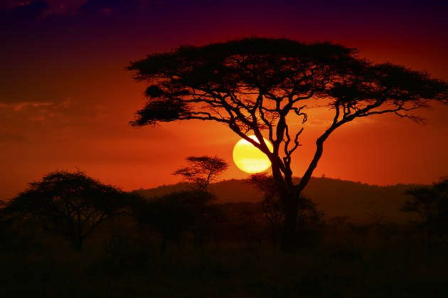 End of a Safari-day in the Serengeti, Africa