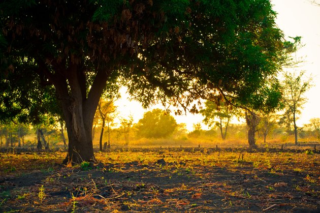 Golden Scenic Panorama