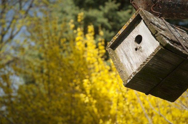 Wren House in Spring