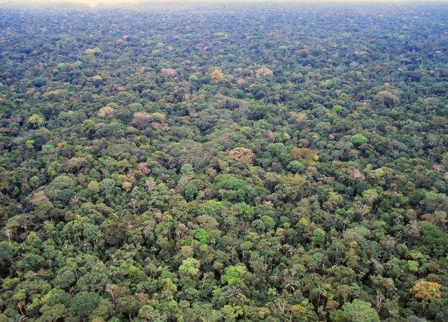 Primary rainforest in the Ecuadorian Amazon