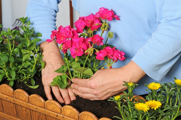 Planting a flower box