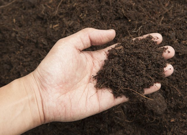 Soil- handful,female hands, humus soil