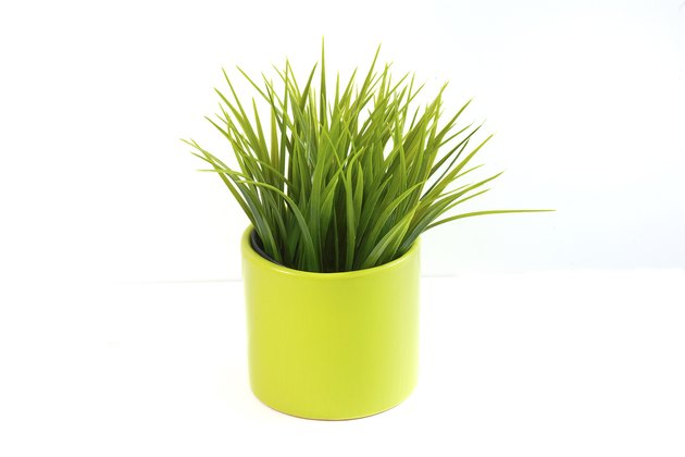 Grass in a pot