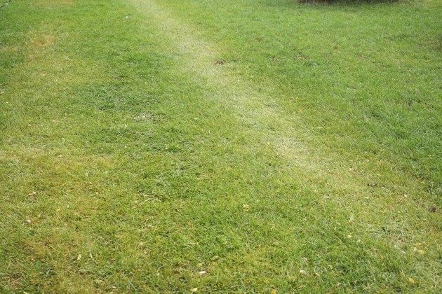Lawn Footpath
