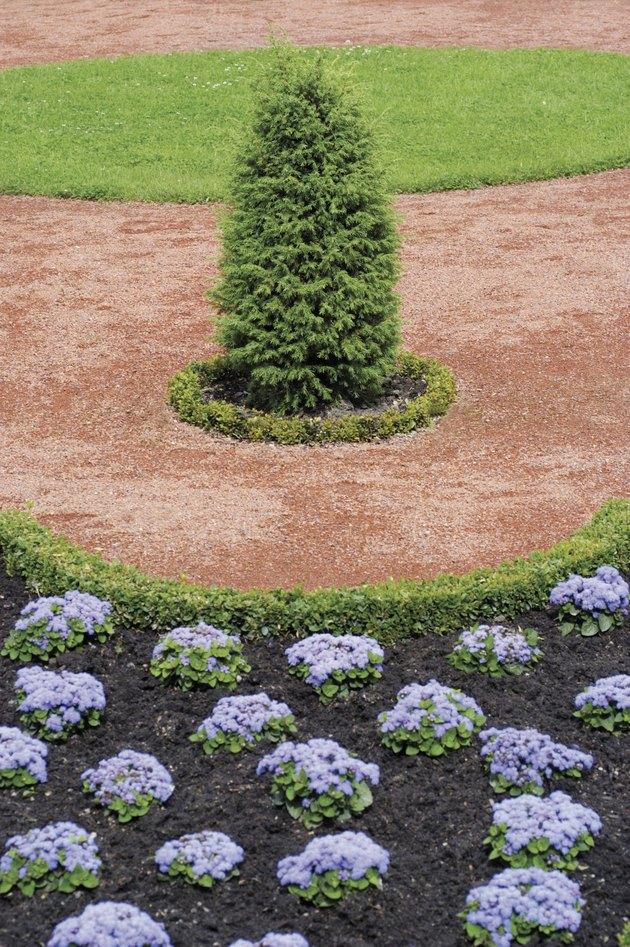 How to Grow Emerald Green Arborvitae in Pots   Hunker