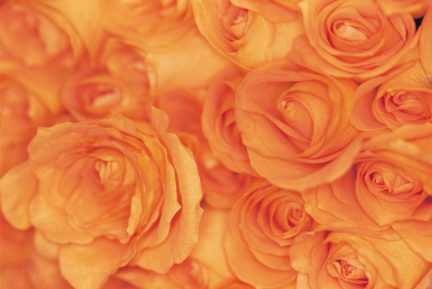 Close-up of bouquet of orange roses