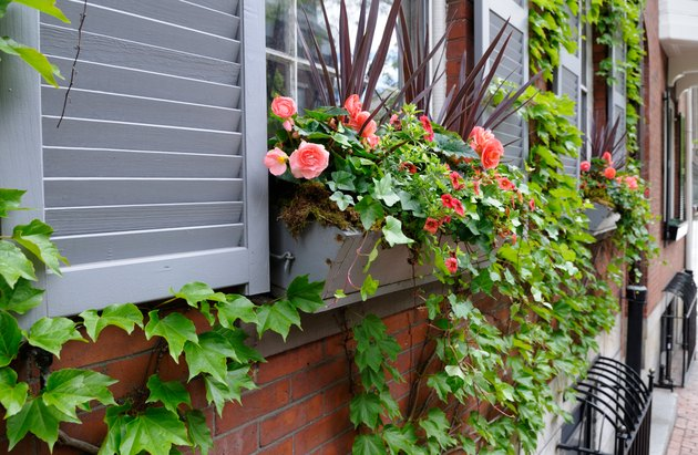 Window Box and Red Roses