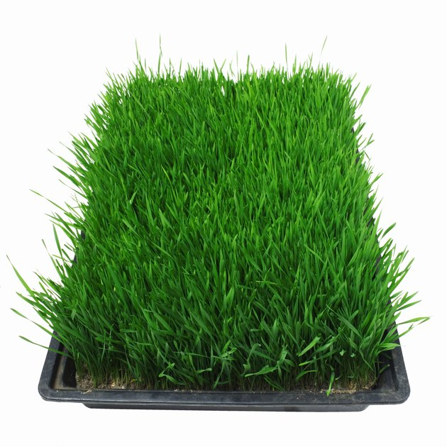 Close up of container of grass