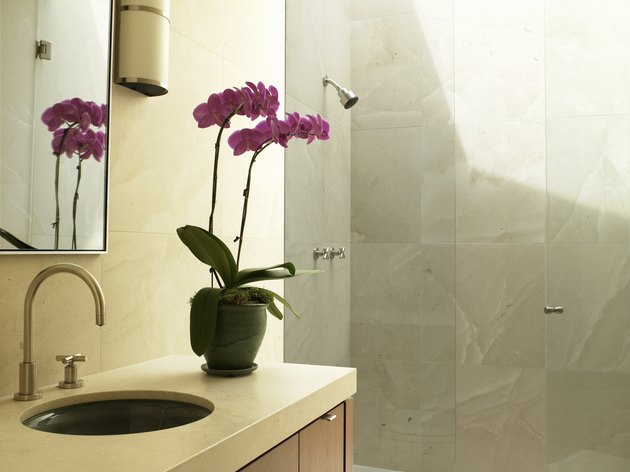 Orchid plant on bathroom vanity