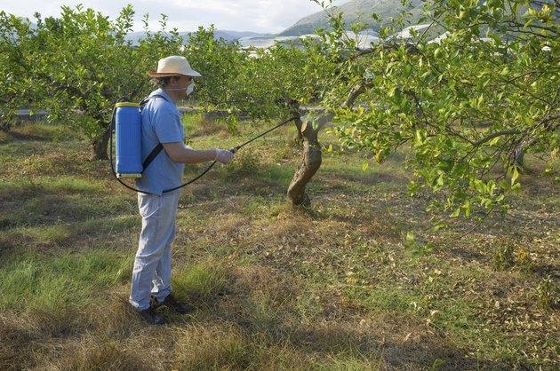 Spraying a lemon plantation