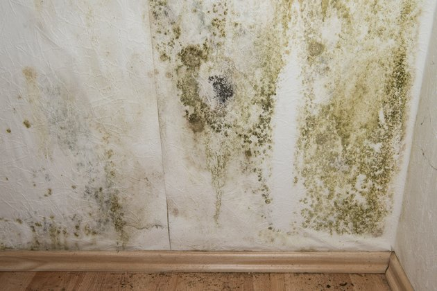 How to Kill Mold in Walls