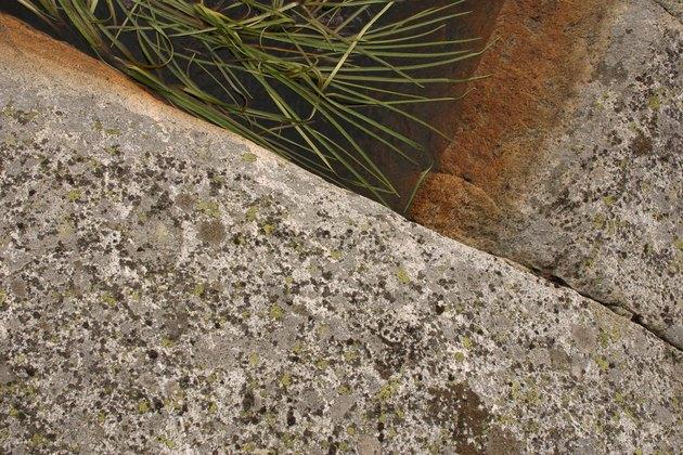 Vegetation by concrete slab