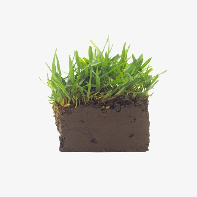 Earth with growing grass