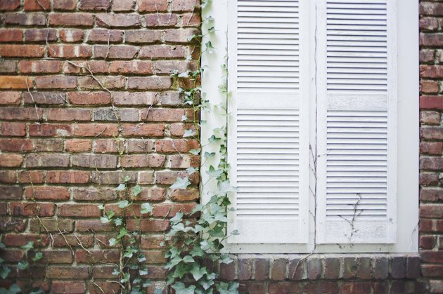 Shuttered window of brick house with ivy growing on it