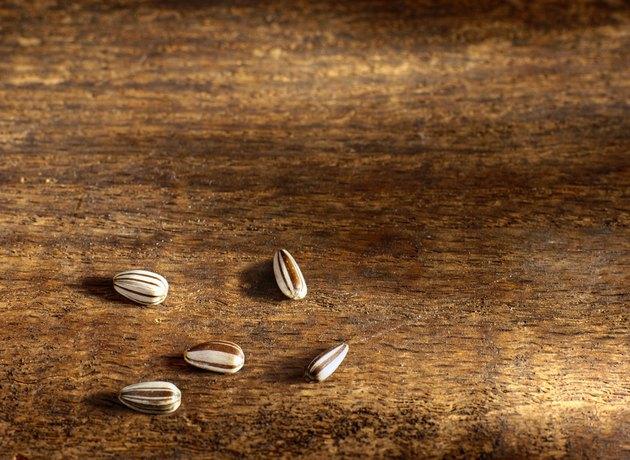 Five Sunflower Seeds