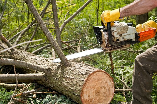 Hands of logger slicing tree with chainsaw