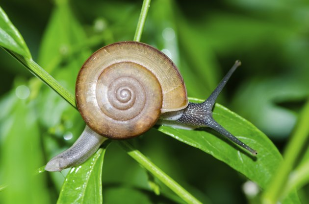 Close-up of snail walking on the leaf.