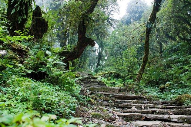 nepalian rainforest with pathway