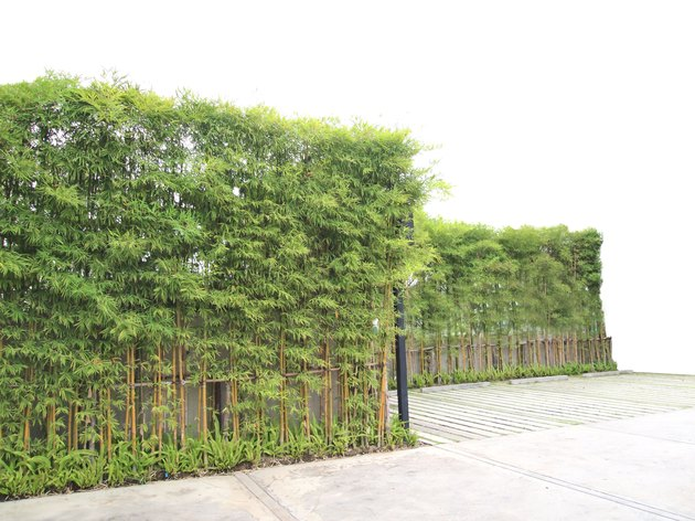 bamboo wall or panel