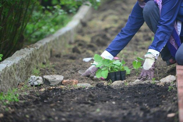 Backyeard gardening