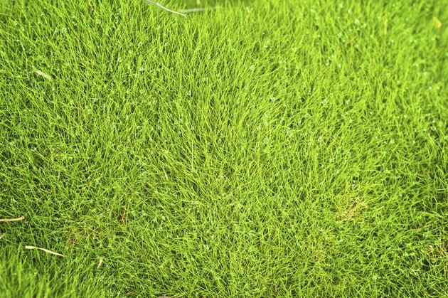 background image, zoysia grass