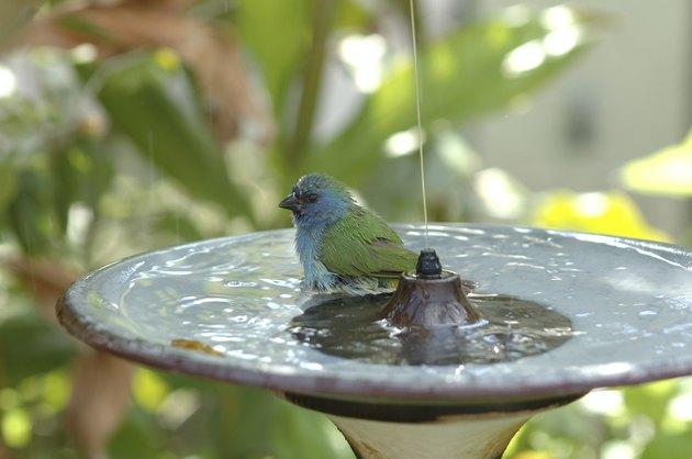 Splish splash taking a bath