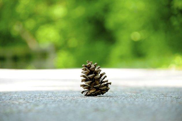 pine one