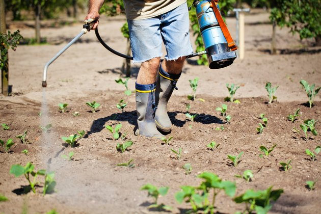 Pest Control Worker Insecticide Spraying of a plant field