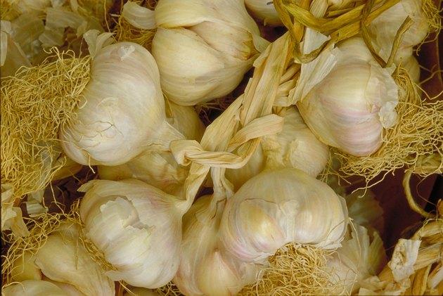 Bunch of garlic cloves