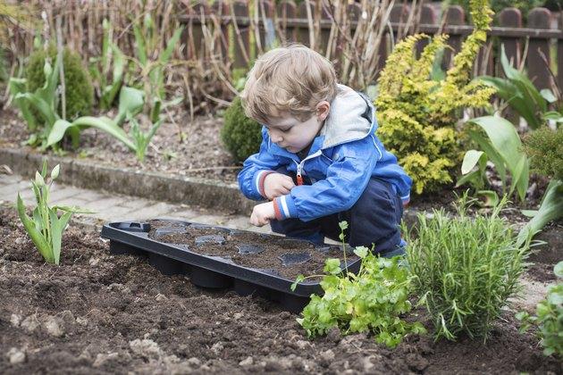 Little boy planting seeds in vegetable garden