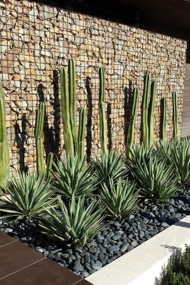 desert plants for landscaping curve leaf yucca