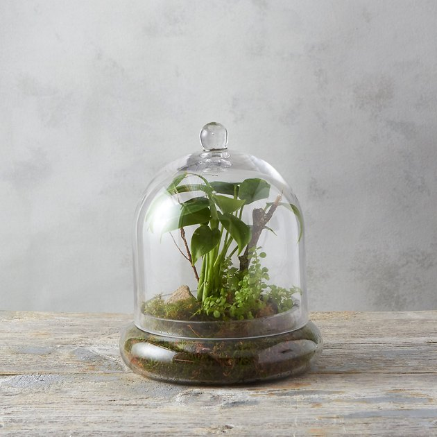 Terrain glass cloche.