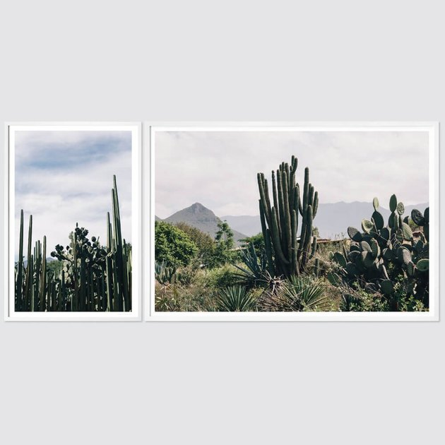 two photos of cacti