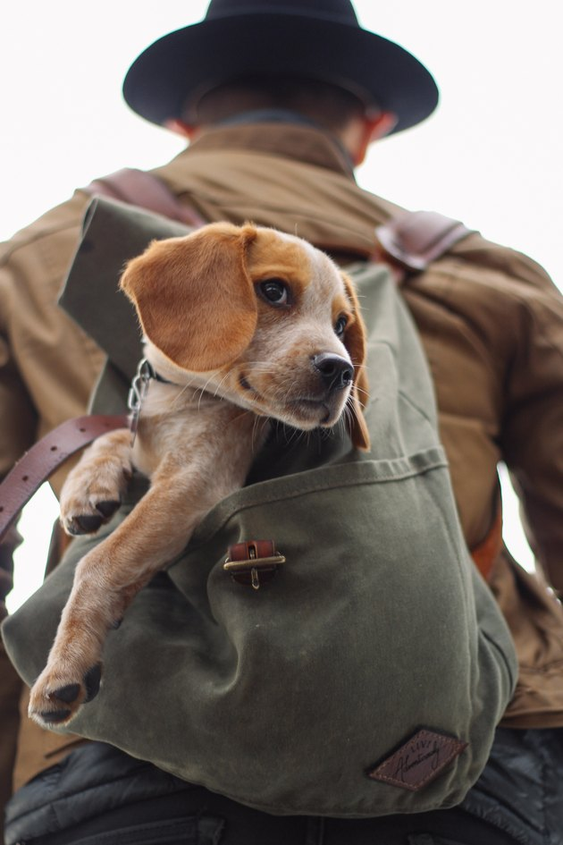 dog in backpack