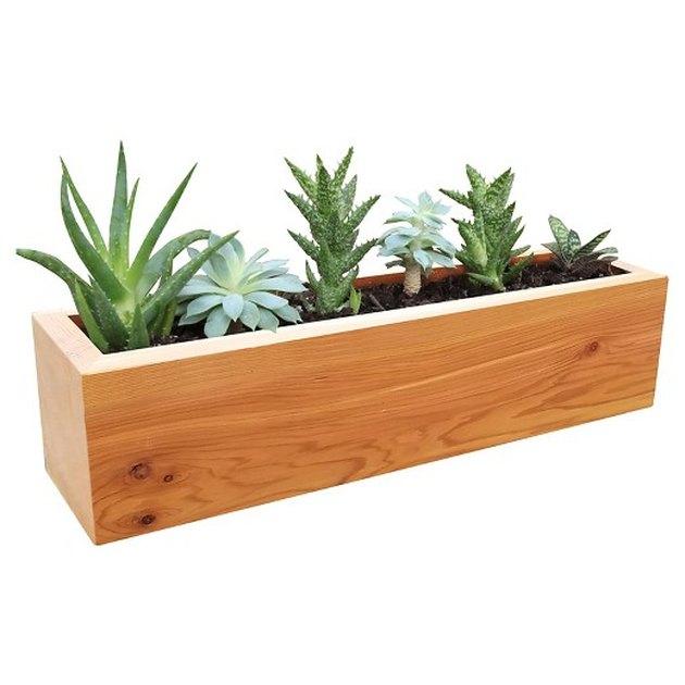 Target succulent planter.