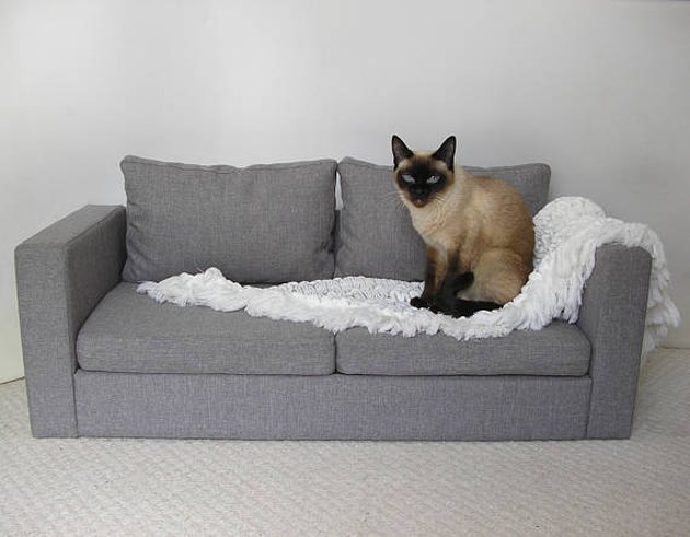 pet ikea sofa