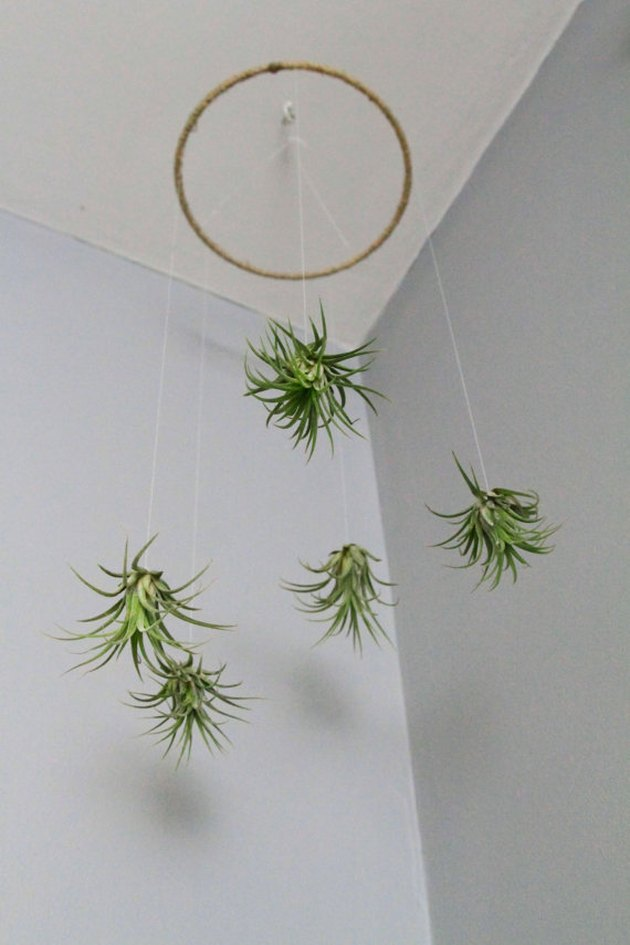 air plant mobile
