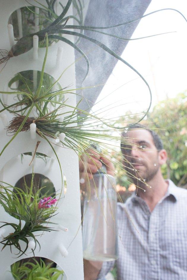 Misting air plants.