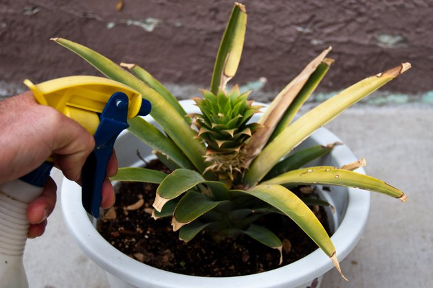Home Remedy for Spider Mites on Plants | Hunker