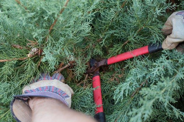 How To Trim Juniper Shrubs Hunker