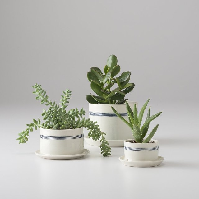 Green Thumbs Up: The Best Places to Shop for Indoor Planters | Hunker