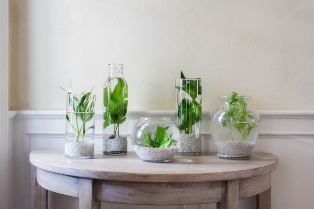 Indoor Water Garden: Plants and Ideas to Get You Started | Hunker