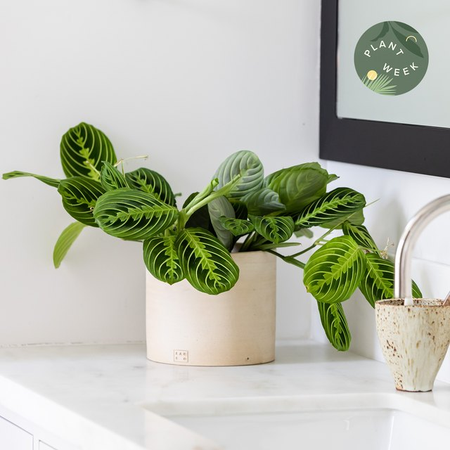 Plant Week: The Beginner's Guide to All Things Plants | Hunker