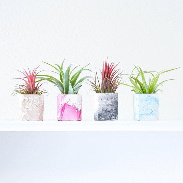 Four small airplant holders with white marble design featuring beige, pink, gray and blue marble lines, respectively.