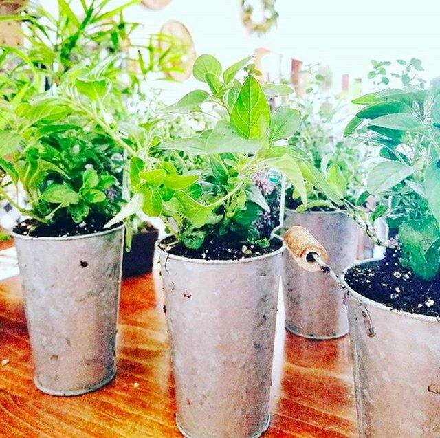 Herbs In Galvanized Pots