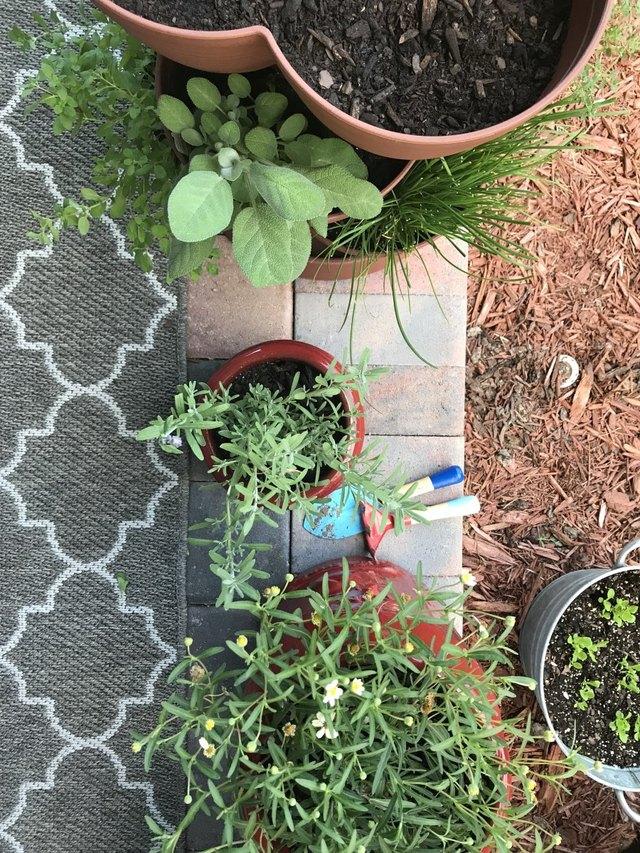 Patio container garden