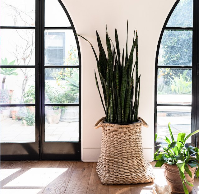These Houseplants Have Special Properties That Soothe and Calm You | Hunker