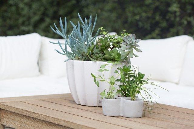 Herbs and Spices Garden