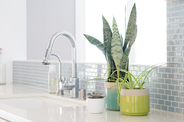 Houseplants That Won't Wilt in Your Kitchen Heat (They'll Actually Thrive) | Hunker