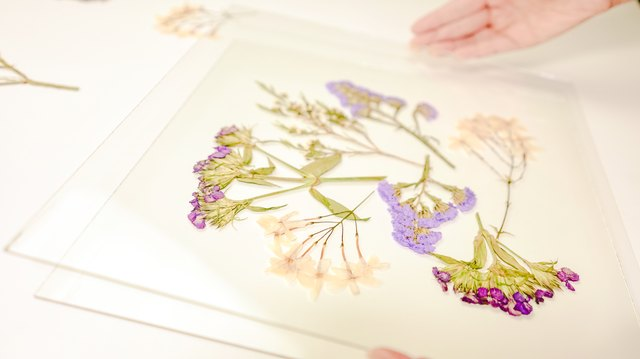 Framed Pressed Flowers DIY